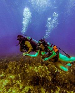 Scuba diving Hedonism